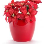 packshot objet - photos d'objets - pot de fleur 2